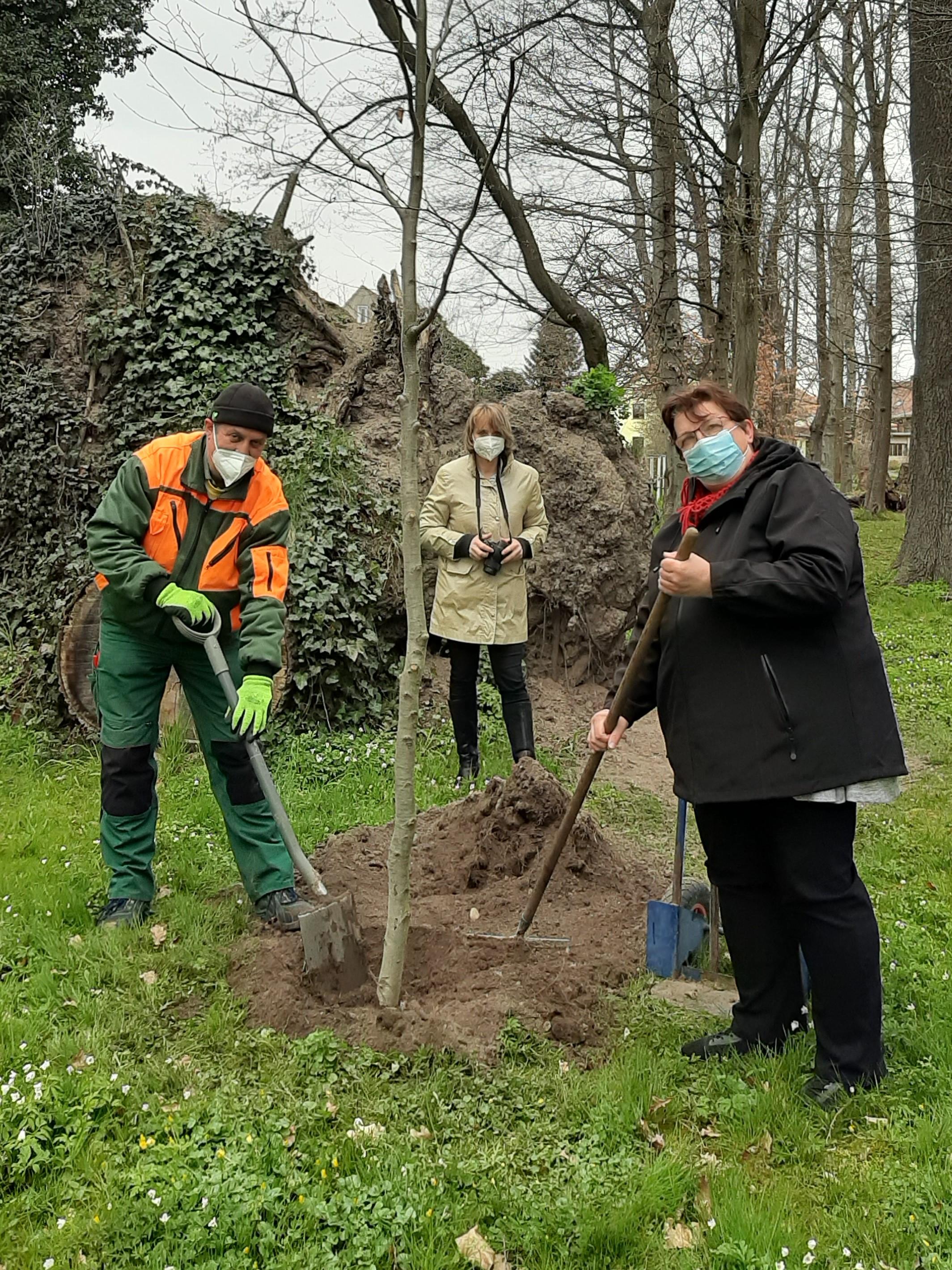 Baumspende vom Dresdner Heidebogen e.V.